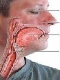 anatomia laringoedema