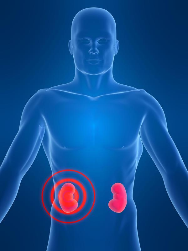 Funções dos rins: aprenda de forma fácil